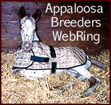 Appaloosa Breeders Network